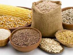 АО ВК МКК закупает рожь продовольственную, кукурузу, ячмень