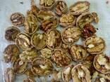 Грецкий орех - фото 2