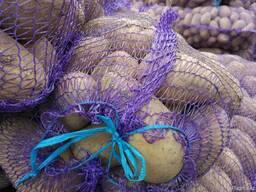 Картофель из Беларуси экспорт - фото 3
