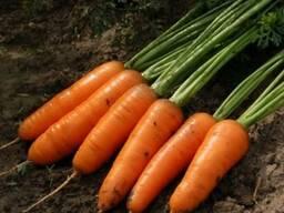 Картофель, морковь, зерновые