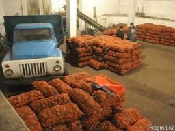 Картофель оптом сорт Гала, Радриго и Розаро - всего 38тг