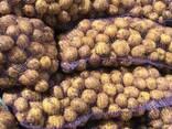 Картофель Оптом ЗКО - фото 2