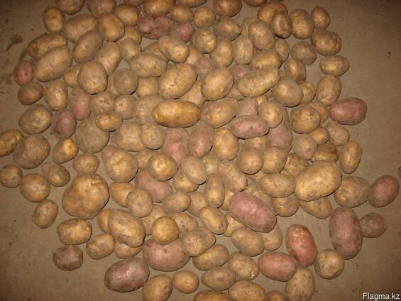 Картофель от производителя в г. Рудном.