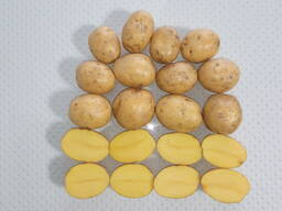 Картофель семенной: Кроне и Джувел - Элита