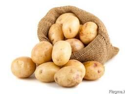 Картофель из Павлодара