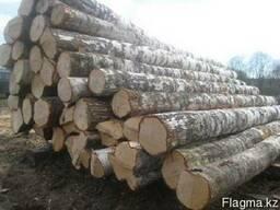 Круглый лес породы Тополь (Терек)