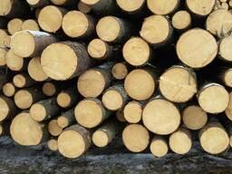Круглый лес породы Яблоня, Груша, Вишня