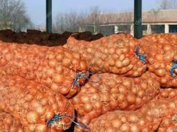 Куплю лук репчатый оптом мин. 100 тон на экспорт.