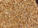 Семена льна (Flax-seed) - фото 1