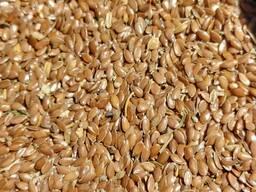 Семена льна (Flax-seed)