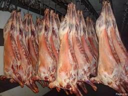 Мясо Баранина Халал (свежезаморозка)