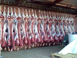 Мясо говядины 1,2 категории Охлажденка и Заморозка