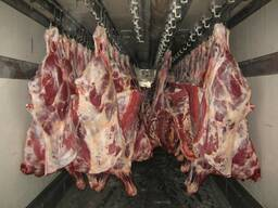 Мясо говядины оптом. На кости.