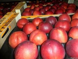 Нектарин и персик из Испании. Прямые поставки.