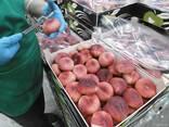Нектарин и персик из Испании. Прямые поставки. - фото 3