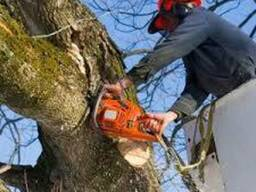 Обрезка деревьев, услуги автовышки до 35 метров