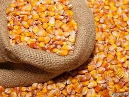 Оптовая продажа фуражной кукурузы