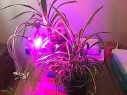 Освещение для роста и развития растений - Фитолампа 60 вт