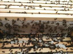 Пчелопакеты, карника