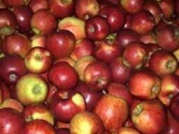 Польские яблоки разных сортов от производителя
