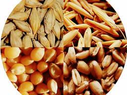Предлагаем экспорт зерновой-культуры на выгодных условиях.