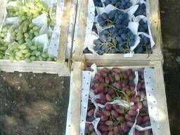 Продаем виноград из Узбекистана - фото 2