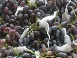 Продаем виноград из Узбекистана - фото 4