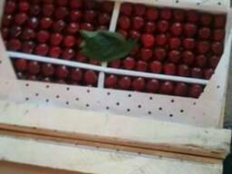 Продам черешню, урожай 2017, Узбекистан.