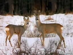 Продам лесное -охотничье хозяйство УКраина