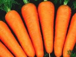 """Продам Морковь товарную сорт """"Абако"""""""