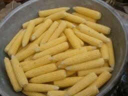 Продам свежую кукурузу в початках