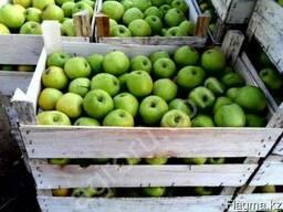 "Продам яблоки азербайджанские 250 тг/кг - ""Голдэн"", ""Семерен"