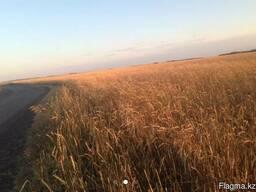 Продам земельный участок сельхоз назначения. - фото 2
