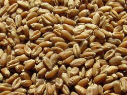 Продам зерно 3 класса