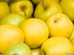 Продажа отборных яблок