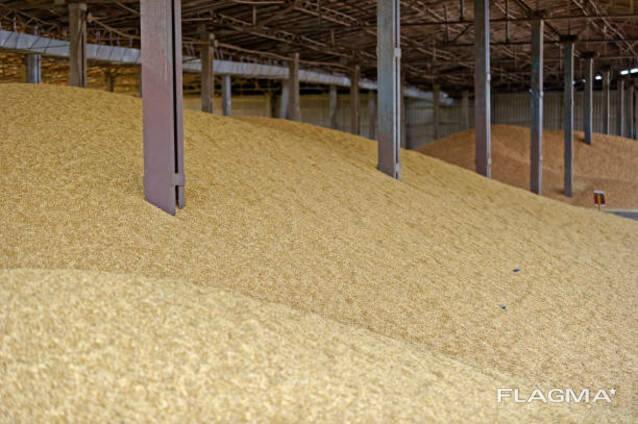 Пшеница, лен, рапс, подсолнечник, горох, нут, горчица