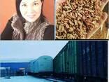 Пшеница, ячмень, овёс, отруби, кукуруза, - фото 1