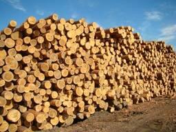 Реализуем лес кругляк
