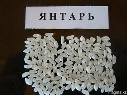 """Рис в Кызылорде оптом с завода производителя """"Асыл Дән ЛТД"""""""