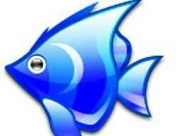 Рыбы, морепродукты семга икра лосось щука форель карась Аста