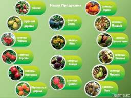 Саженцы для интенсивного сада