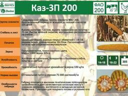 Семена кукурузы Каз-ЗП-200