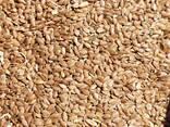 Семена льна (Flax-seed) - фото 3