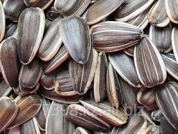 Семена подсолнечника масличного. Сорта. Оптом