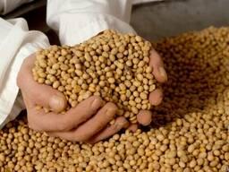 Соевые бобы 300тн с Дальнего Востока