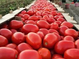 Томат и помидор