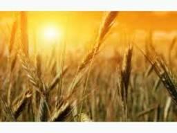 Украинские . зерновые 2019 год