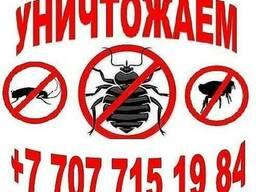 Уничтожение насекомых Дезинсекция