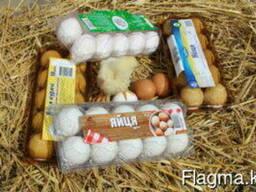 Упаковка для яиц, ягод, овощей и фруктов, мяса и т. д.