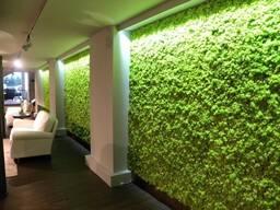 Вертикальное озеленение г. Астана